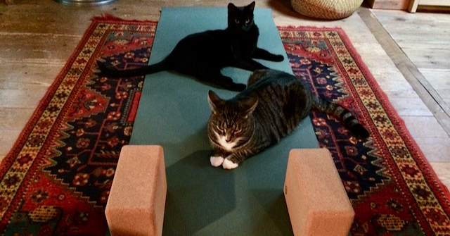 The Joys of Home Yoga Practice by Carol Gray at MamaSpace Yoga